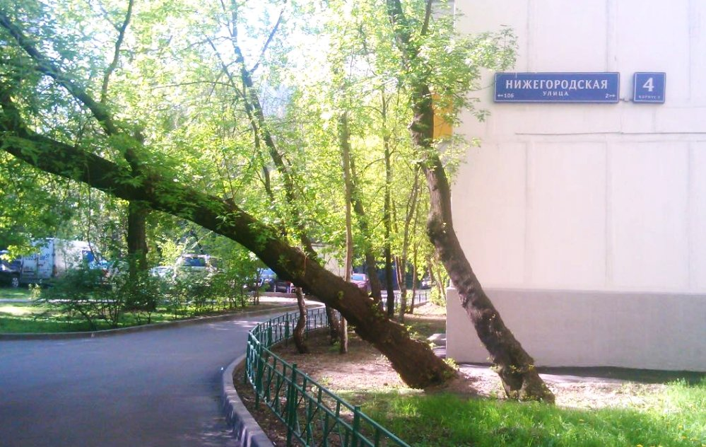 Наклонившееся дерево на Нижегородской, 4